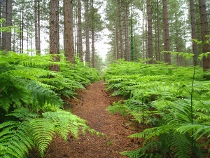 trail-in-forest