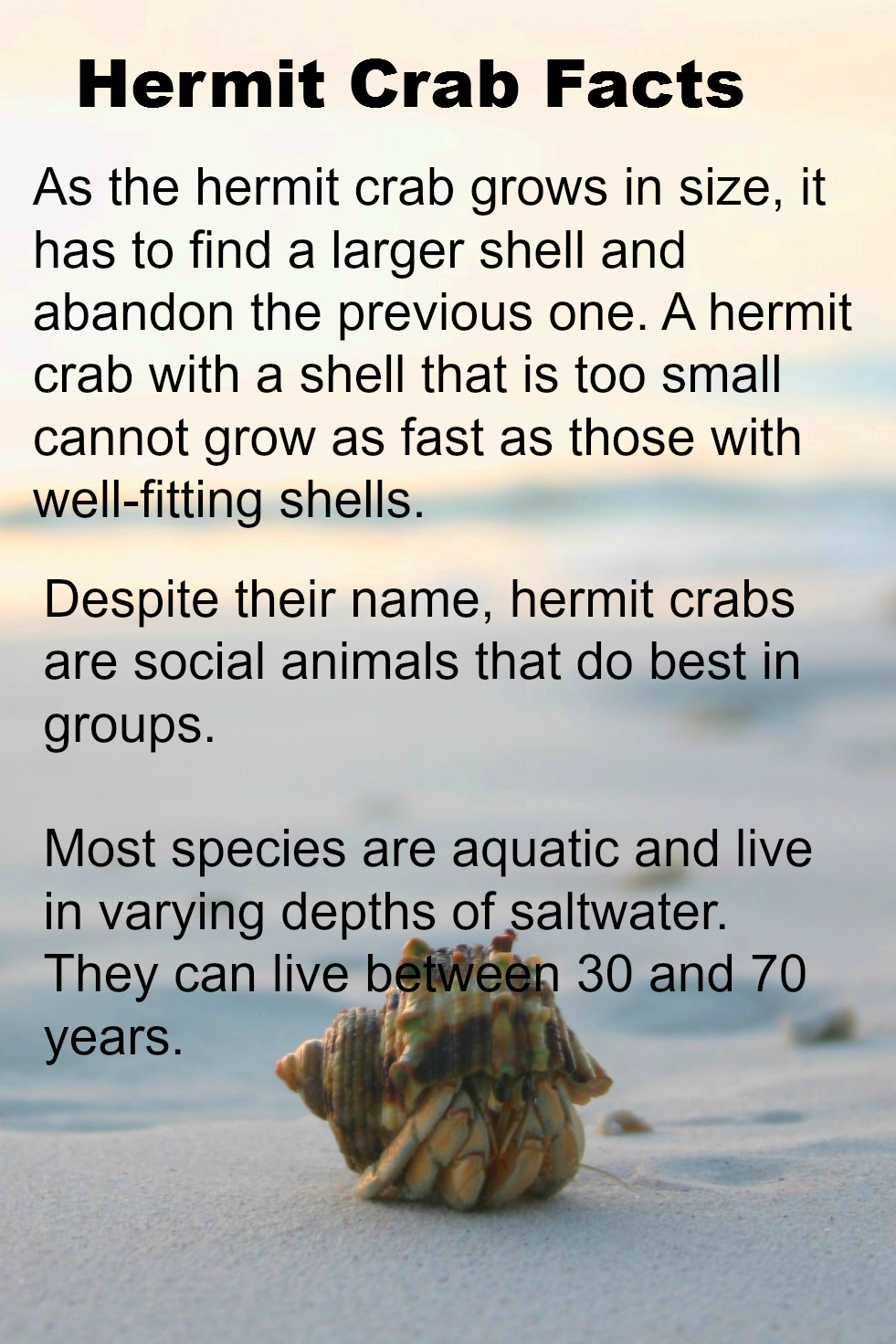 Notes On A Hermit Crab ~ A Nature Object Lesson – The Adventist Home ...