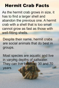 hermit crab facts