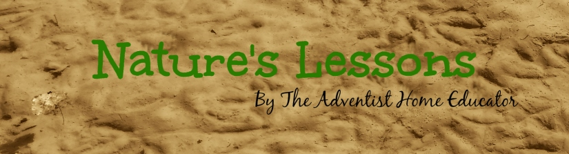 Natures Lessons7